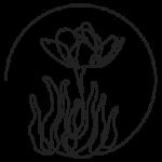 Kollektiv Anemone
